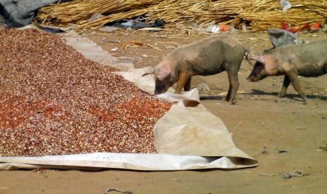 Арахисовая скорлупа для скота