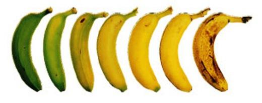 Бананы: от зеленого к спелому
