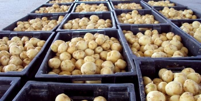 Как и где правильно хранить картофель?