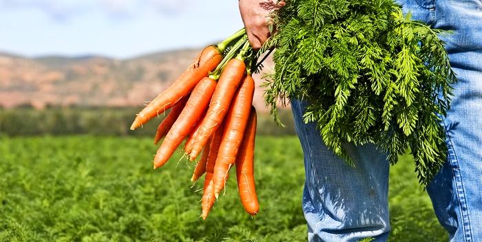 Мужчина с пучком моркови