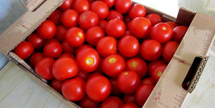 Как и где правильно хранить помидоры?