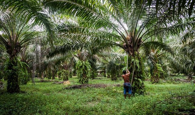 Выращивание пальмового дерева