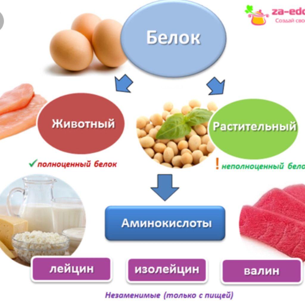 Растительный и животный белок Белковые продукты