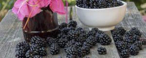 Польза ягод для мужчин и женщин