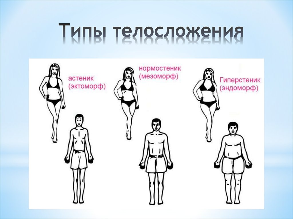 Типы телосложения с картинками