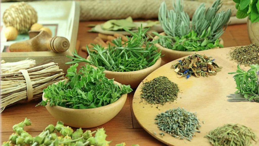 Травы способствующие похудению