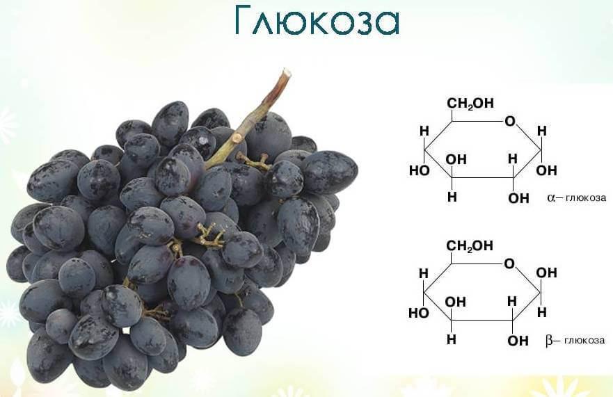 моносахариды и дисахариды