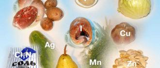 Минеральные вещества представляют собой необходимые компоненты питания, благодаря которым обеспечивается жизнедеятельность и полноценное развитие организма.