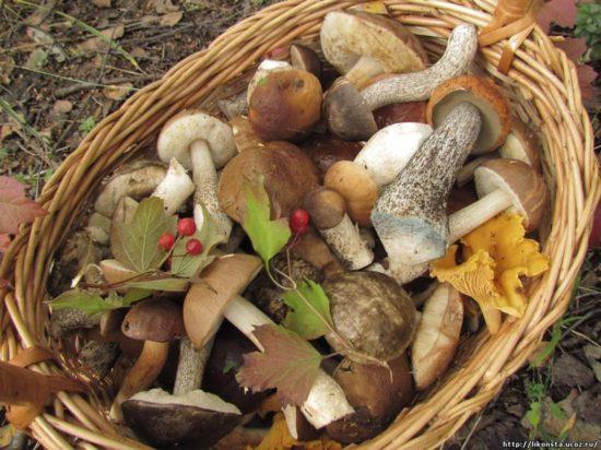 Непереносимость грибов