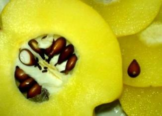 Разрезанный плод айвы